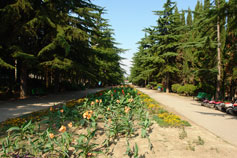 Алушта. Аллея в Приморском парке