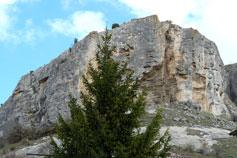 Ёлка в горах Крыма