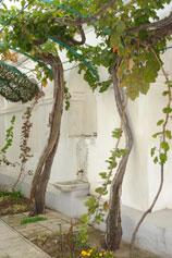 Евпатория. Кенаса. Виноградный  дворик. Лозам по 130 лет.