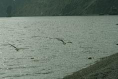 Берег, чайки над морем