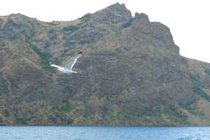 Крым. Полёт чайки над Карадагом