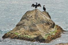 Фото птиц на камне возле Кастрополя