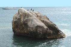 Береговое море катер птицы