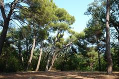 Вековой парк Ливадии