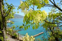 Ливадия, дорога к морю
