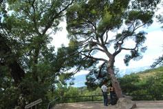 Никитский Сад. Вид на Ялту
