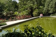 Пруд в Никитском Ботаническом Саду
