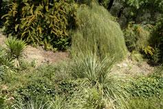 Парк в Никитском Ботаническом Саду