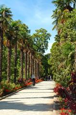 Пальмовая аллея - Никитский Ботанический Сад
