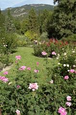Пейзаж с розами