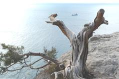 Морской пейзаж в окрестностях Нового Света