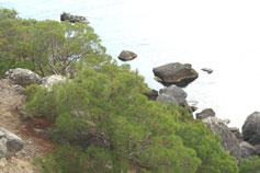 Вид с экологической тропы Новый Свет - Караул-Оба - Кутлакская бухта