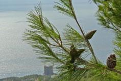 Вид на море из Оливы