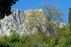 Олива, горный пейзаж фото