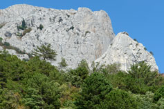 Растительность Крымских скал