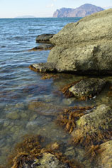 Орджоникидзе. Морские водоросли на прибрежных камнях