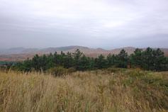 Туманное утро в окрестностях поселка Орджоникидзе