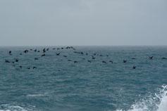 Фото, море, Симеиз, перелётные птицы