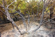 Симеиз, лес после пожара в августе 2007
