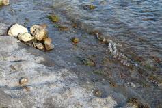 Фото каменного пляжа на Алчаке