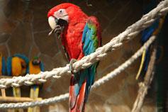 Ялтинский зоопарк Сказка. Попугай Ара Зелёнокрылый